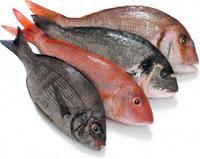 pescadocomer